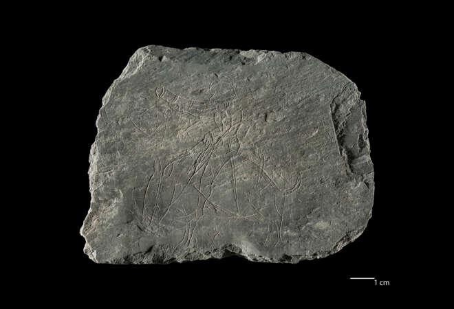 Uitzonderlijke archeologische vondsten werpen nieuw licht op het middeleeuwse leven in Brugge